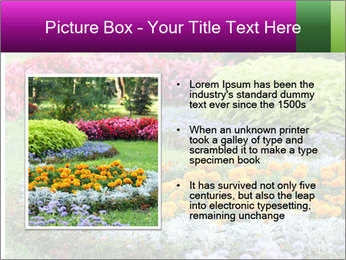 Blossoming colorful flowerbeds in summer city park PowerPoint Template - Slide 13