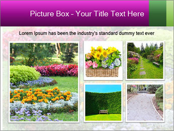 Blossoming colorful flowerbeds in summer city park PowerPoint Template - Slide 19