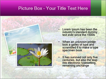 Blossoming colorful flowerbeds in summer city park PowerPoint Template - Slide 20