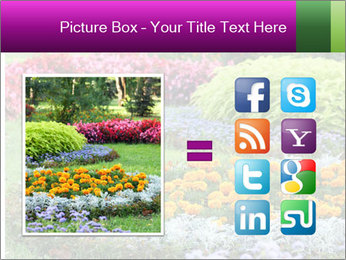 Blossoming colorful flowerbeds in summer city park PowerPoint Template - Slide 21