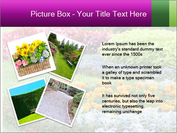 Blossoming colorful flowerbeds in summer city park PowerPoint Template - Slide 23
