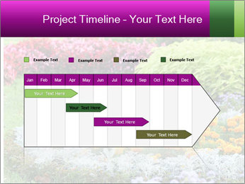 Blossoming colorful flowerbeds in summer city park PowerPoint Template - Slide 25