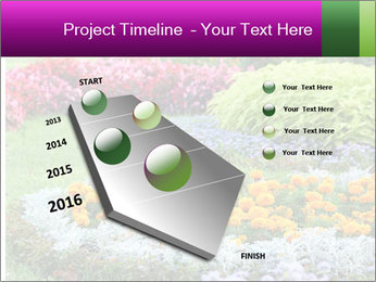 Blossoming colorful flowerbeds in summer city park PowerPoint Template - Slide 26