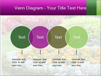 Blossoming colorful flowerbeds in summer city park PowerPoint Template - Slide 32