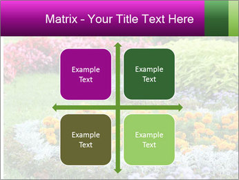 Blossoming colorful flowerbeds in summer city park PowerPoint Template - Slide 37