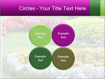 Blossoming colorful flowerbeds in summer city park PowerPoint Template - Slide 38
