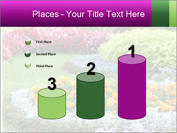 Blossoming colorful flowerbeds in summer city park PowerPoint Template - Slide 65