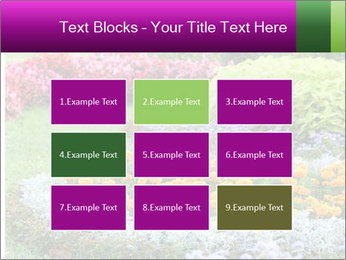 Blossoming colorful flowerbeds in summer city park PowerPoint Template - Slide 68