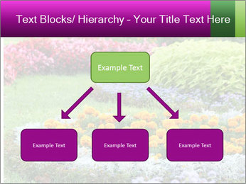 Blossoming colorful flowerbeds in summer city park PowerPoint Template - Slide 69