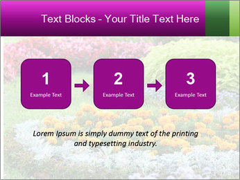 Blossoming colorful flowerbeds in summer city park PowerPoint Template - Slide 71