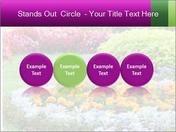 Blossoming colorful flowerbeds in summer city park PowerPoint Template - Slide 76