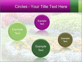 Blossoming colorful flowerbeds in summer city park PowerPoint Template - Slide 77
