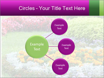 Blossoming colorful flowerbeds in summer city park PowerPoint Template - Slide 79