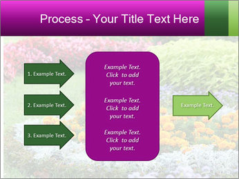 Blossoming colorful flowerbeds in summer city park PowerPoint Template - Slide 85