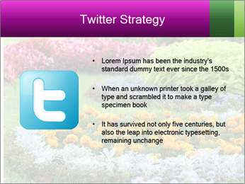 Blossoming colorful flowerbeds in summer city park PowerPoint Template - Slide 9