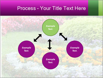 Blossoming colorful flowerbeds in summer city park PowerPoint Template - Slide 91