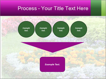 Blossoming colorful flowerbeds in summer city park PowerPoint Template - Slide 93