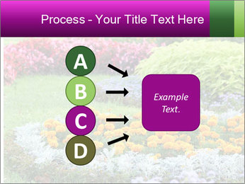 Blossoming colorful flowerbeds in summer city park PowerPoint Template - Slide 94