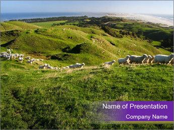 Sheep running PowerPoint Template - Slide 1