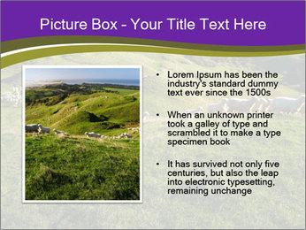 Sheep running PowerPoint Template - Slide 13
