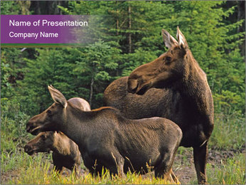 Moose Cow PowerPoint Template - Slide 1