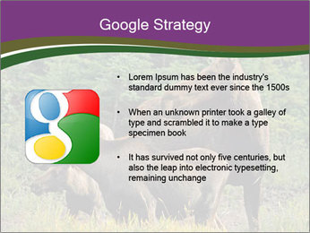 Moose Cow PowerPoint Template - Slide 10