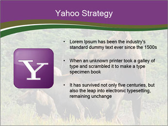 Moose Cow PowerPoint Template - Slide 11
