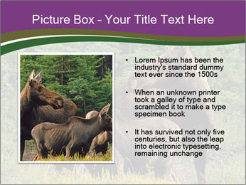 Moose Cow PowerPoint Template - Slide 13