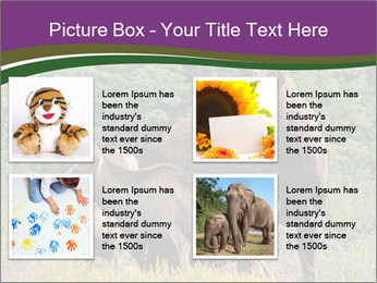 Moose Cow PowerPoint Template - Slide 14