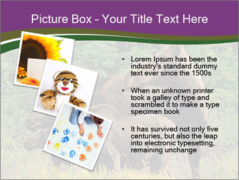 Moose Cow PowerPoint Template - Slide 17