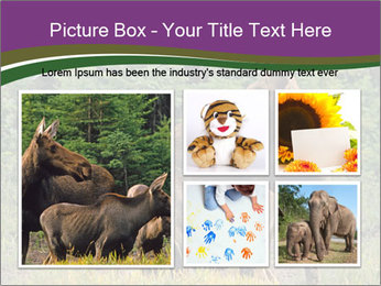 Moose Cow PowerPoint Template - Slide 19
