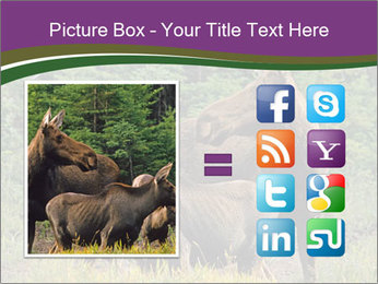 Moose Cow PowerPoint Template - Slide 21