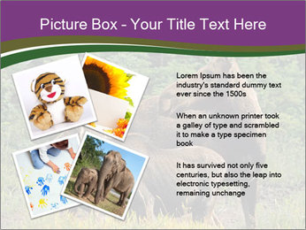 Moose Cow PowerPoint Template - Slide 23
