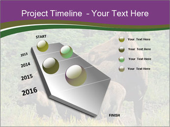 Moose Cow PowerPoint Template - Slide 26
