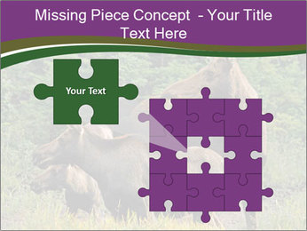 Moose Cow PowerPoint Template - Slide 45