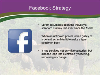Moose Cow PowerPoint Template - Slide 6