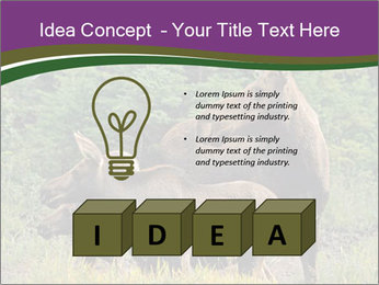 Moose Cow PowerPoint Template - Slide 80
