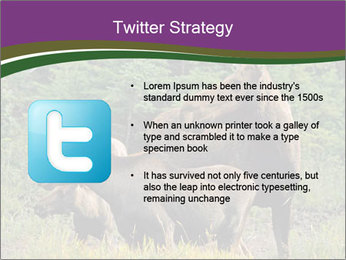 Moose Cow PowerPoint Template - Slide 9