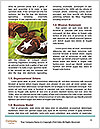 0000092236 Word Template - Page 4