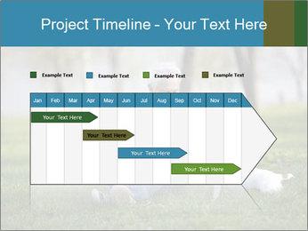 Jack russel terrier PowerPoint Template - Slide 25