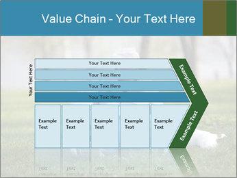 Jack russel terrier PowerPoint Template - Slide 27