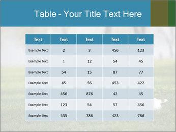 Jack russel terrier PowerPoint Template - Slide 55