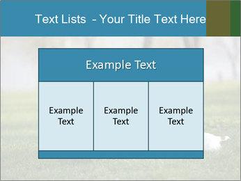 Jack russel terrier PowerPoint Template - Slide 59