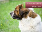 Watchdog PowerPoint Template