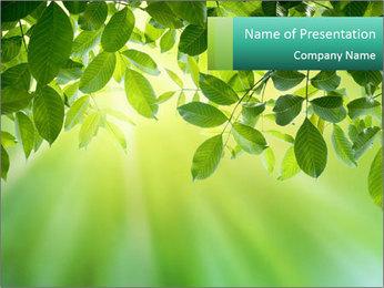Green leaves PowerPoint Template - Slide 1