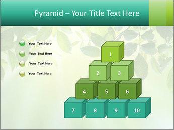 Green leaves PowerPoint Template - Slide 31