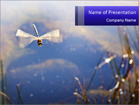 Dragonfly approaching PowerPoint Template