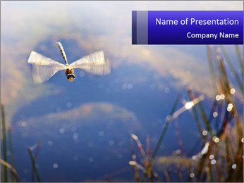 Dragonfly approaching PowerPoint Template - Slide 1