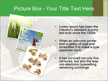 Pigs PowerPoint Template - Slide 17