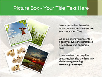 Pigs PowerPoint Template - Slide 23